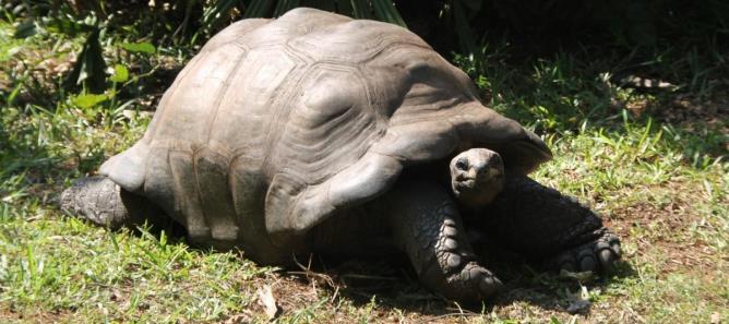 verdens ældste skildpadde